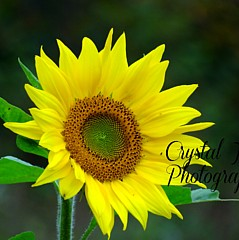 Crystal Joy Photography - Fine Artist