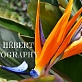 GK Hebert Photography