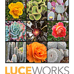 Marcia Luce at Luceworks