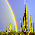 Celebrating The Saguaro Collection
