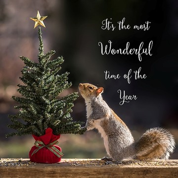 Christmas Squirrel Collection