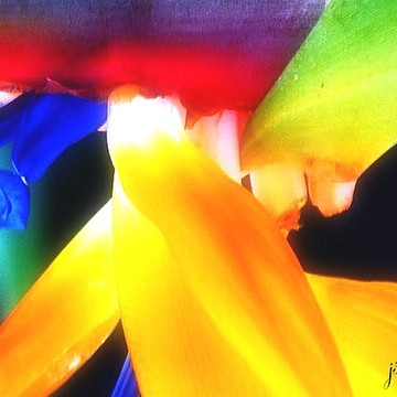 Florals - Abstract - Photography Collection