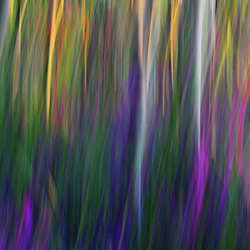 Forest Illusions and  Nature Based Abstracts Collection