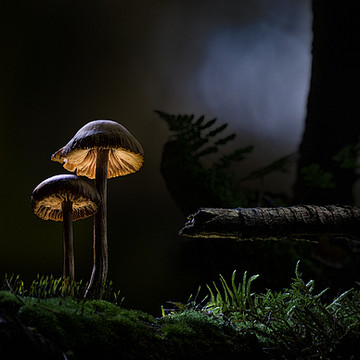Glowing mushrooms Collection