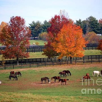 Horse Farm Country Collection