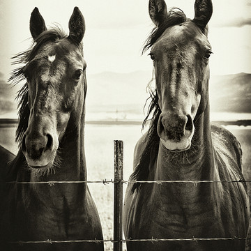 Horses from the series Divine Love of the Equine Kind