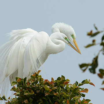 Malibu Nesting Egrets Collection