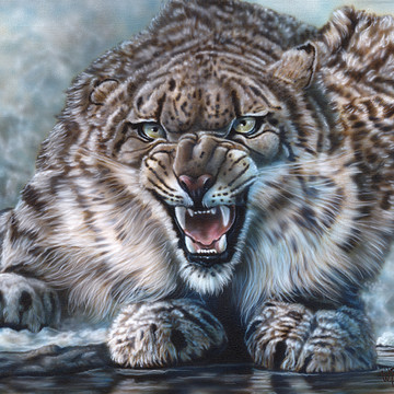 Nature- Canadian Lynx and Snow Leopards Collection
