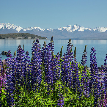 New Zealand Spring Collection