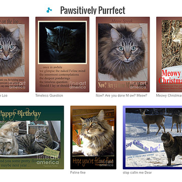 Pawsitively Purrfect Greeting Cards Collection