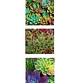 Succulent Garden Collection