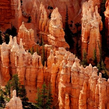 The Bryce Canyon Collection