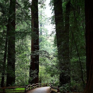 The Muir Woods Collection Collection