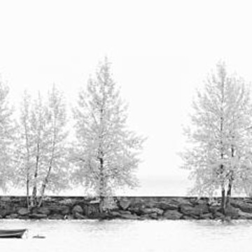 Tree Panorama Black and White  Collection