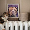 FAA Portraits - Cats and Dogs