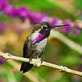 Wonderful World of Hummingbirds - 3 Per Day