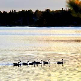 Peaceful Evening on the Lake Minnesota by Ann Brown
