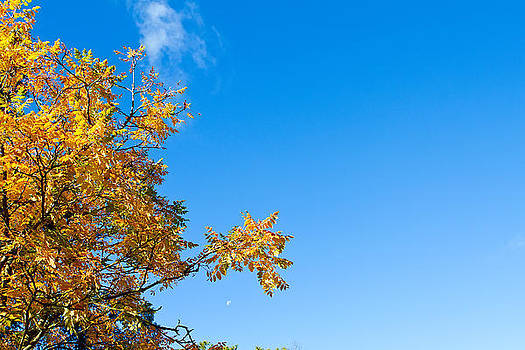 Fizzy Image - autumn tree with blue sky background