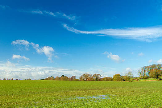 Fizzy Image - green field in english countryside