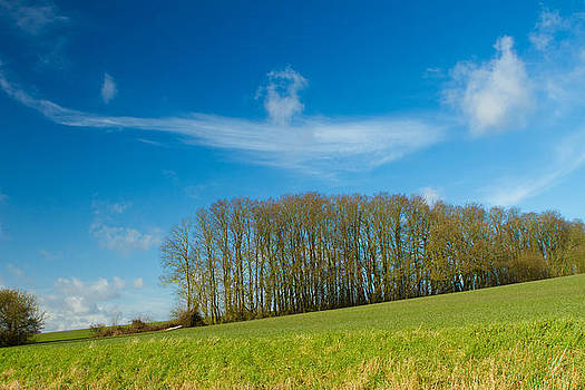 Fizzy Image - hill in a green field in english countryside