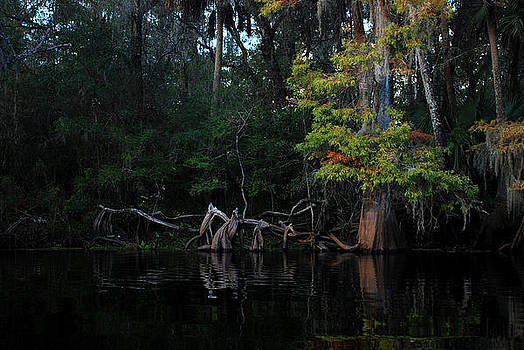 Carol Kay - Hillsborough River Autumn 03