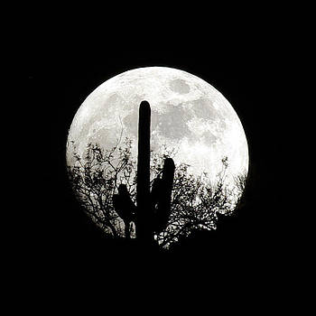 Douglas Taylor - MOONRISE AT SABINO CANYON