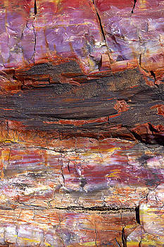 Douglas Taylor - PETRIFIED WOOD ABSTRACT