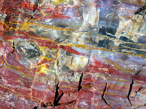 Douglas Taylor - PETRIFIED WOOD IN DETAIL