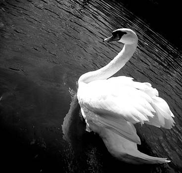 Gilbert Photography And Art - Purity