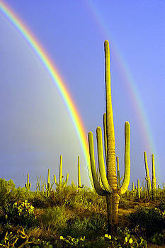 Douglas Taylor - RAINBOWS AND SAGUAROS - RIGHT