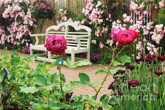 Beverly Claire Kaiya - White Bench and Pink Climbing Roses in English Garden