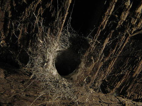 Joseph Doyle - Lair of funnel web spider