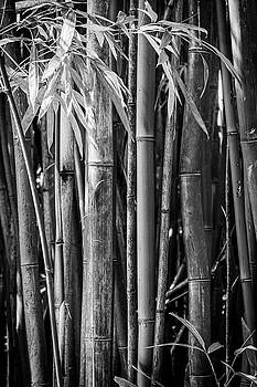 Kelley King - Bamboo Black and White