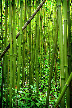 Kelley King - Bamboo Forest