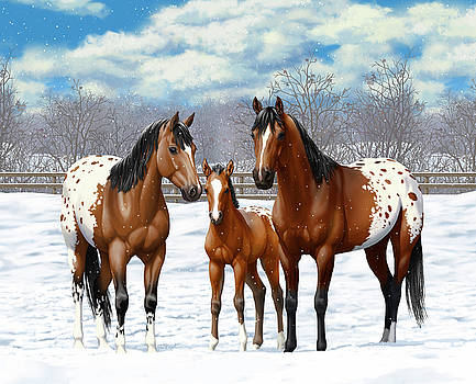 Crista Forest - Bay Appaloosa Horses In Winter Pasture