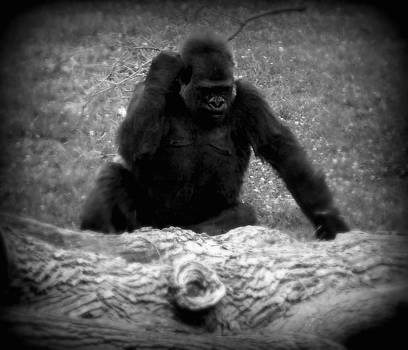 Emily Kelley - Black and White Gorilla
