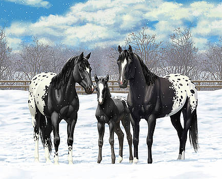 Crista Forest - Black Appaloosa Horses In Winter Pasture