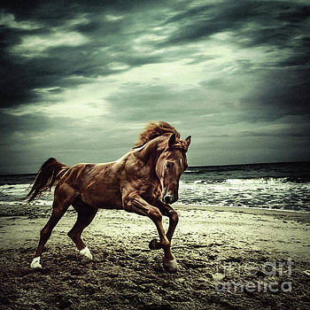 Dimitar Hristov - Brown horse galloping on the coastline
