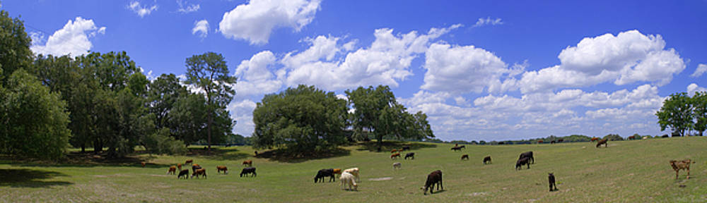 Warren Sarle - Cattle Grazing in an Ancient Sinkhole in Alachua County