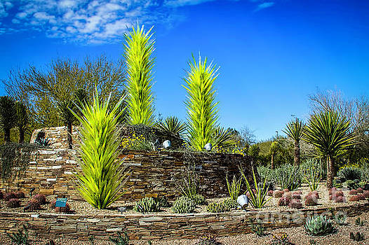 Jon Burch Photography - Desert Botanical Garden Entrance