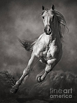 Dimitar Hristov - Galloping White Horse in Dust