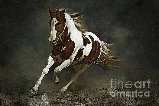 Dimitar Hristov - Pinto Horse in Motion