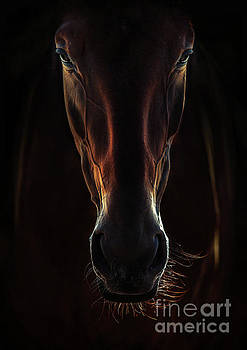 Dimitar Hristov - Portrait Of A Brown Horse Close Up