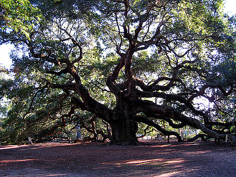Susanne Van Hulst - The Angel Oak in Charleston SC