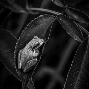 Nature in Black and White Art Competition