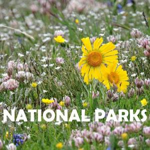 National Parks Spring Art Competition
