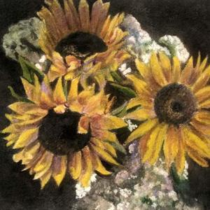 Sunflowers with Black Background  Art Competition